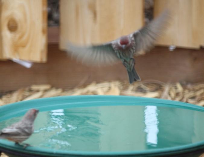 various birds 005