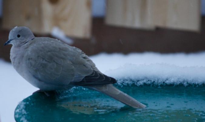 Bird shots 001