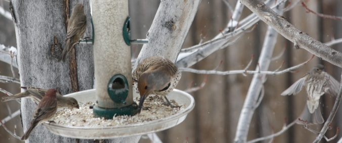 Bird shots 015
