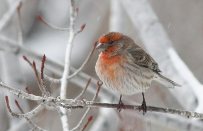 Bird shots 025