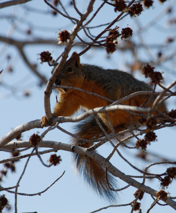 Squirrel and birds in snow 002