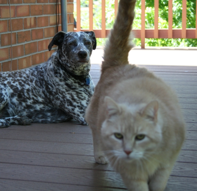 Dogs and Cat 026