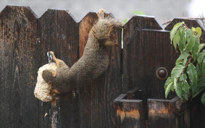 Nothing like waterlogged nut-munch...