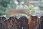Birds squirrels & rainy day shots 031
