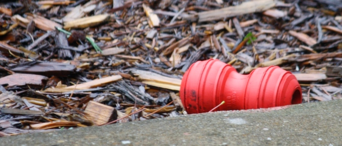 Someone left the Kong out in the rain...