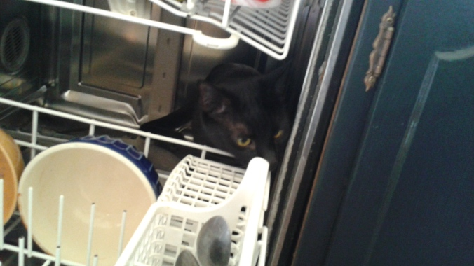 Loki in dishwasher 2