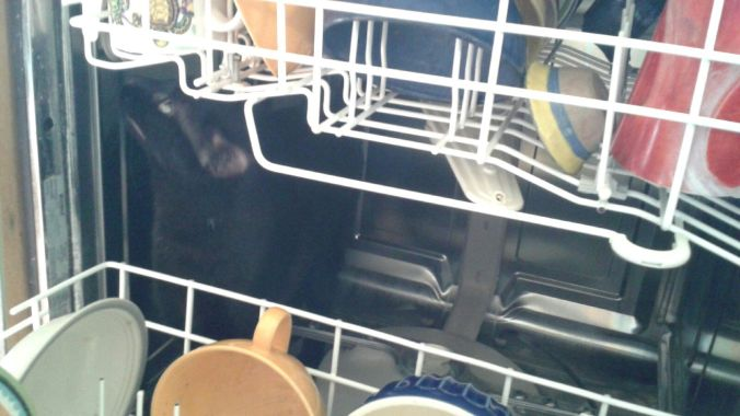 Loki in dishwasher