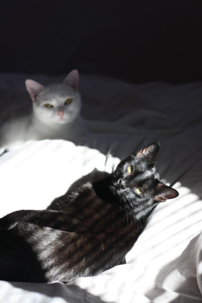 Loki and Marcel 020