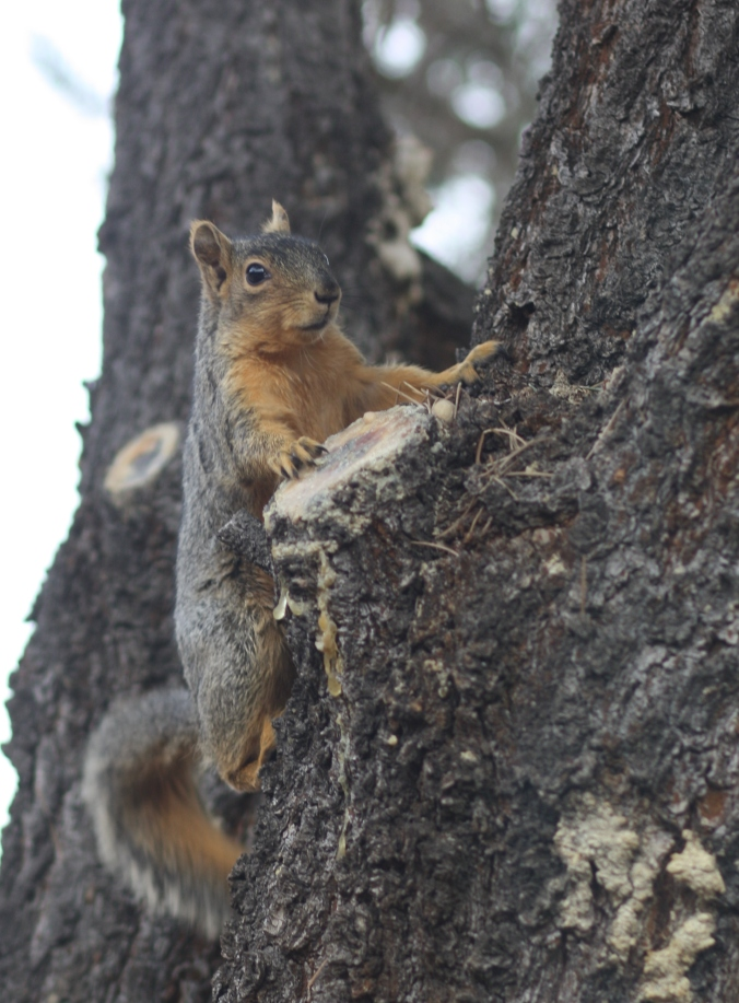 Squirrel courting cats 014