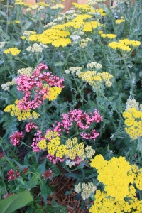 Valerian and Moonshine Yarrow