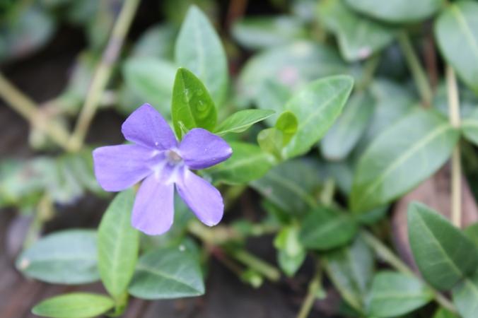 Spring garden shots 012