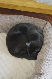 _MG_9865 Loki napping