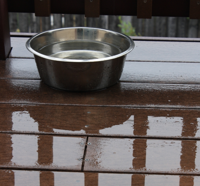 water bowl and puddles
