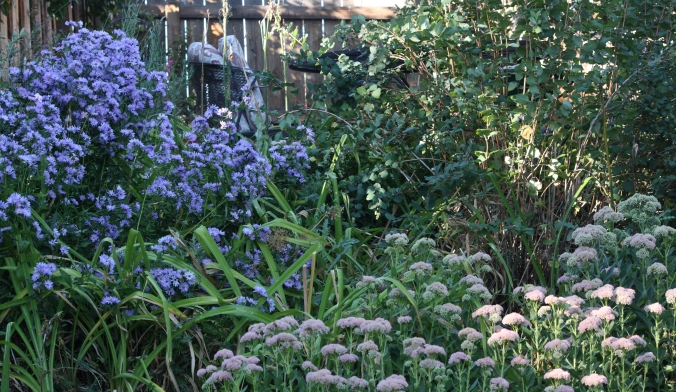 Asters, day lilies, sedum, yarrow, and three shrubs that have run amok.
