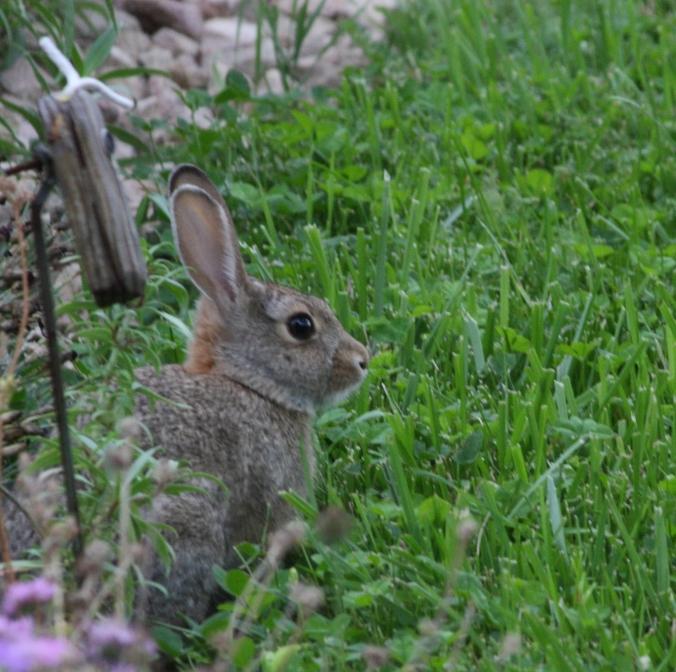 Bunny stiller
