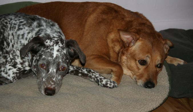 Coco and Zoey in 2009.