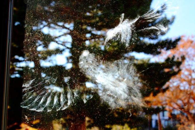 dove-imprint