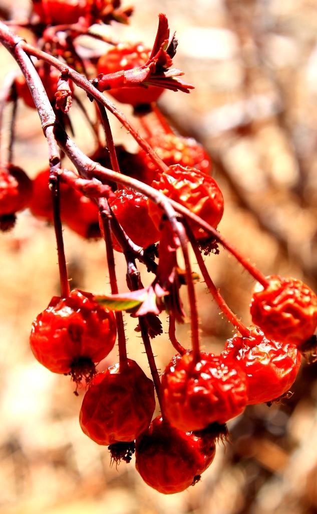 old-berries