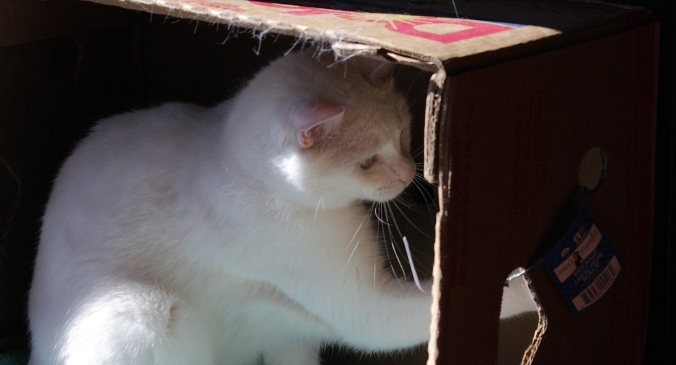 box-of-marcel