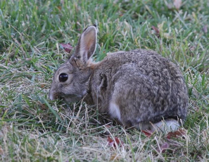 bunny-monday