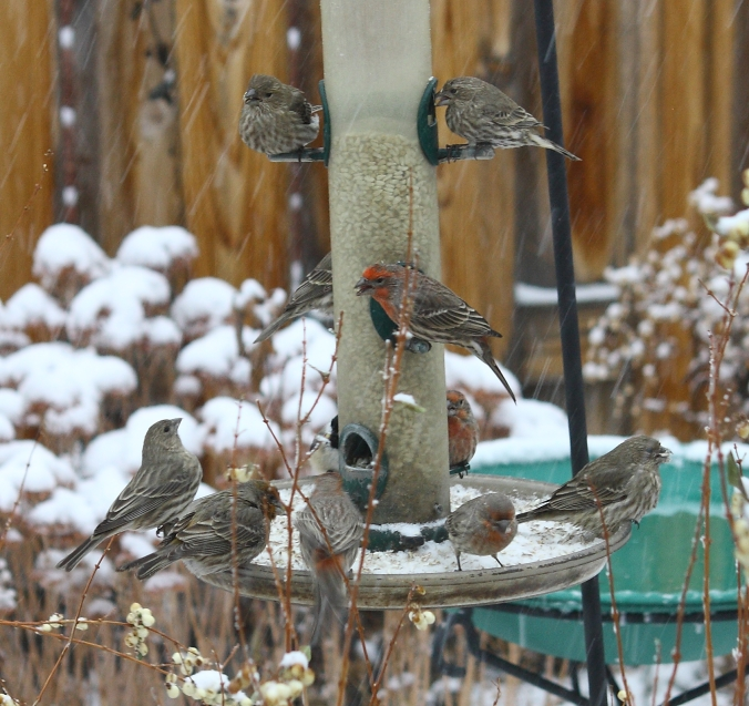 finch-feeding-frenzy