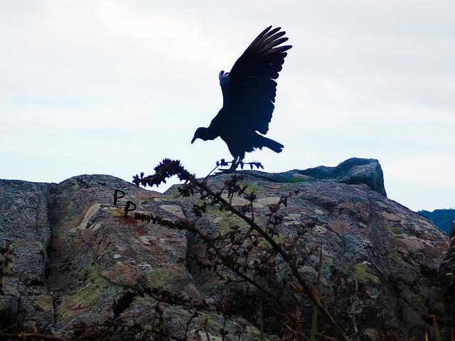 vulture-275425_640